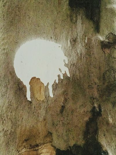 White Paint On Tree Trunk White Paint Marking