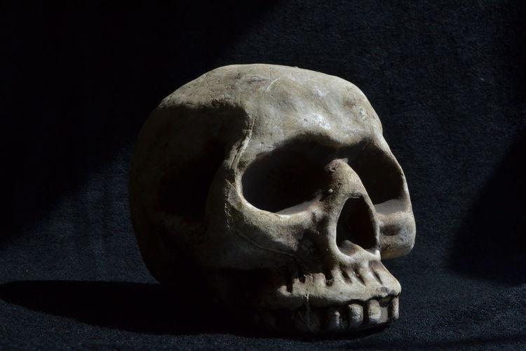 Black Background Close-up Dark Photography Skeleton Skull