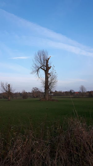 Tree Bare Tree Agriculture Sky Grass Landscape