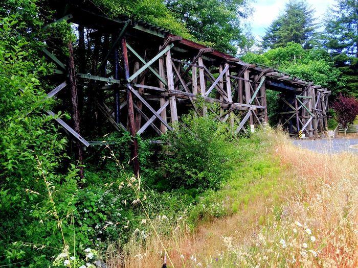1800s train bridge used for logging. First Eyeem Photo