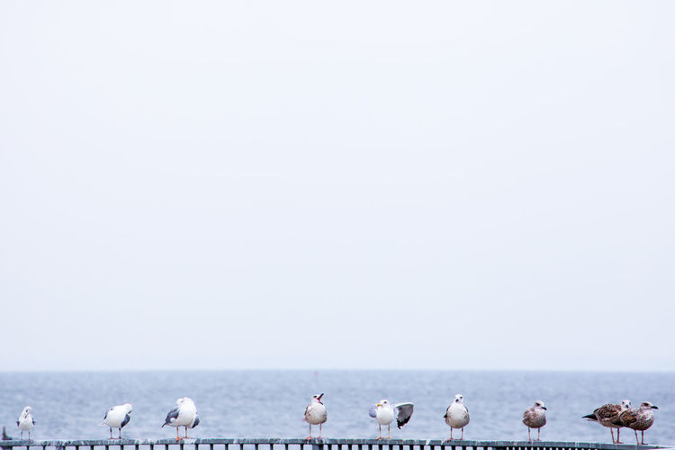 Animal Themes Animals In The Wild Baltic Sea Beach Beauty In Nature Bird Day Flock Of Birds Horizon Over Water Mecklenburg-Vorpommern Nature No People Outdoors Perching Sea Sea Bird Seagull Sky Water