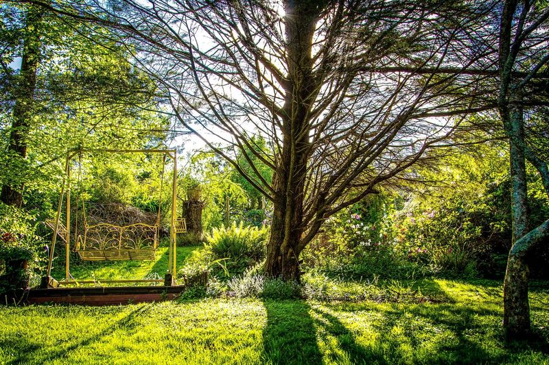 Spring time. Tree Nature Grass Beauty In Nature Tranquility Green Color Growth Outdoors No People Day Sunlight Sky Low Angle View Australia Tree Freshness Leaf Tranquility Serenity