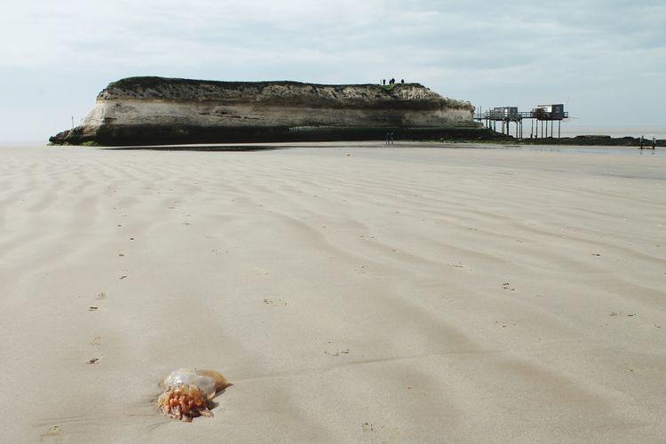 Beach Sand Sea Animal Wildlife No People Day Outdoors