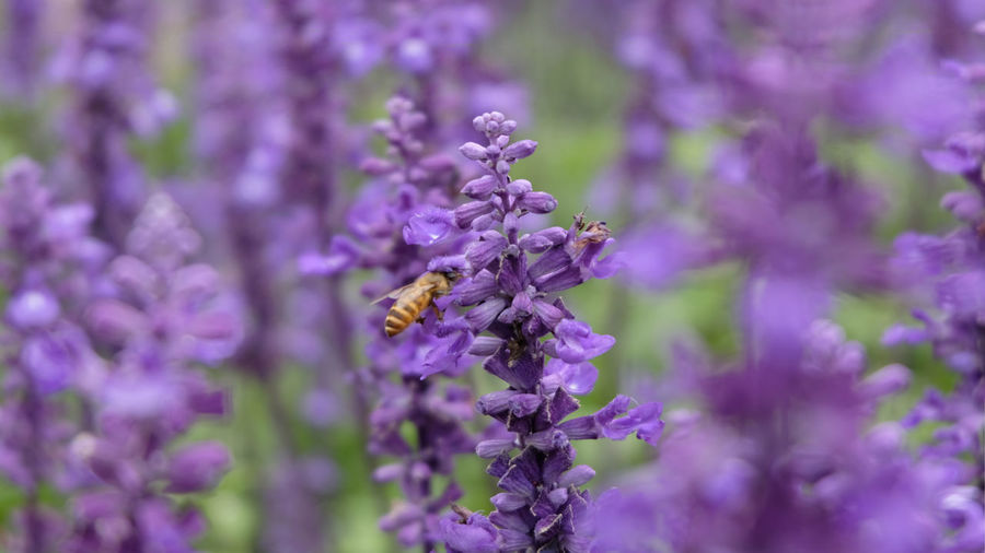 Wild Bee And