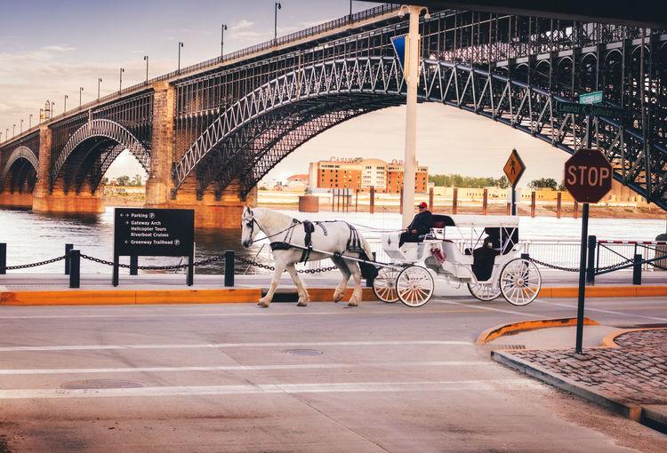 Transportation Bridge - Man Made Structure Stl Horse