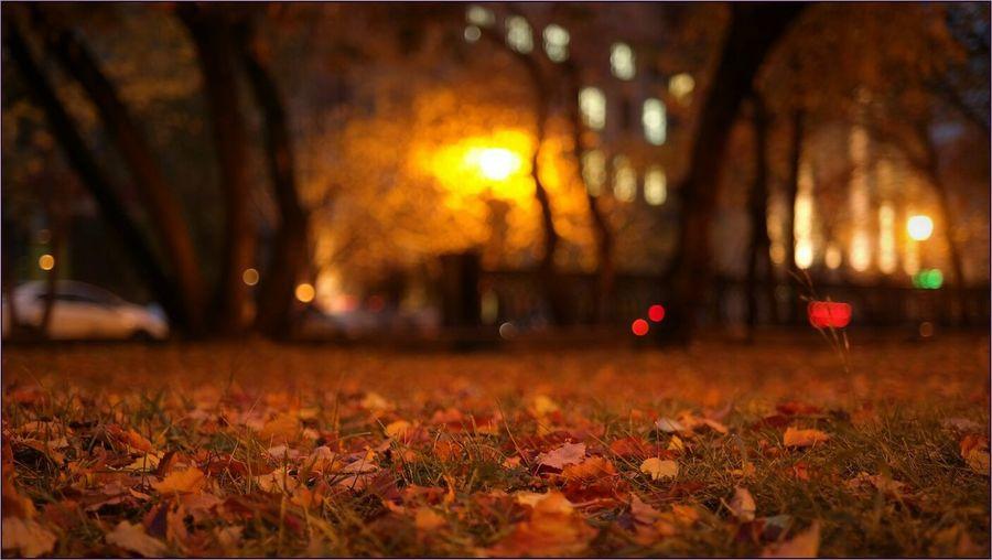 Вечерние прогулки. Relaxing Night Lights Street Autumn осень Light And Shadow Nature Siberia Red