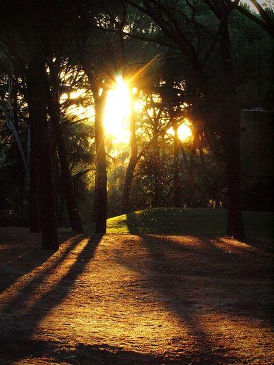 Sunlight Outdoors Sunbeam No People The Way Forward Shadow Tree Illuminated Sunset Nature Sky