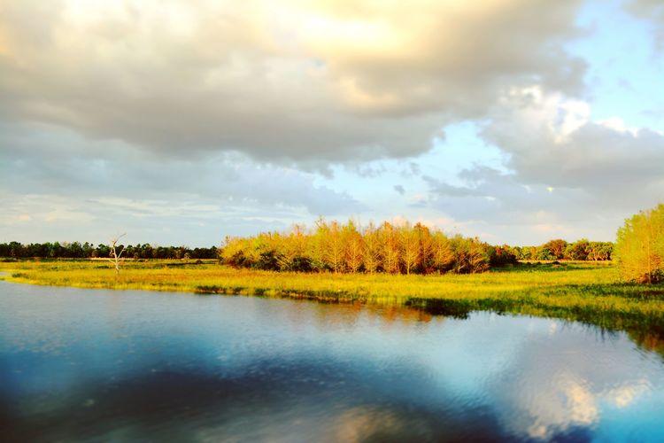 Wetlands in