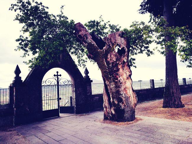 Tree Day No People Outdoors Eerie Eerie Beautiful Eternity Eternal Life Beautiful ♥