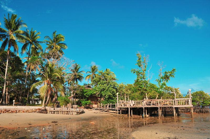 Treveling Tropical Climate Travel Destinations Illustration Bintan  Tropical Paradise INDONESIA Bintanisland Tree Blue Sky Palm Tree Sand Hooded Beach Chair Beach Beach Hut Date Palm Tree