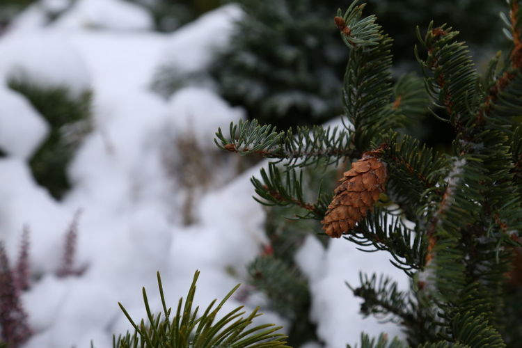 Close-up of butterfly on pine tree