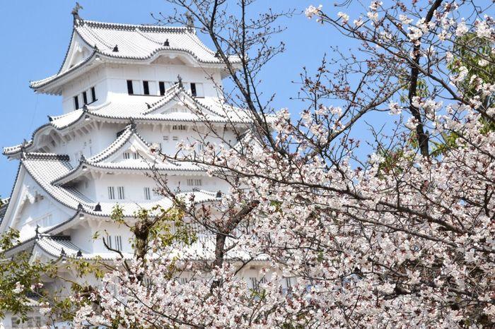 Himeji Castle 姫路城 桜 Cherry Blossoms 3月 Eyemphotography EyeEm Best Shots NIKON D5300 EyeEm Japan Japan EyeEmBestEdits Sakura Japan Photography