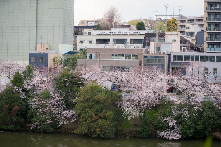 Tokyo Institute