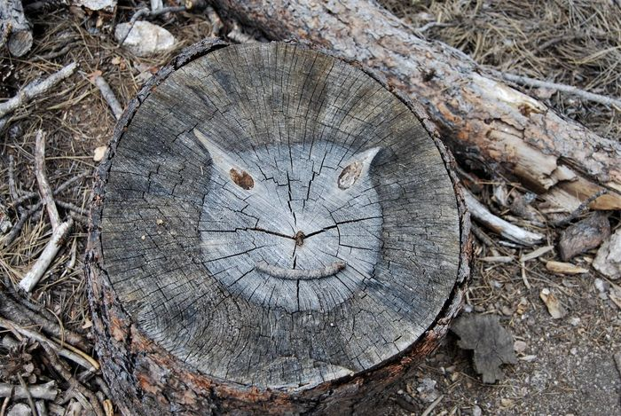 Close-up Day Log Nature Nature Nature Art No People Outdoors Timber Tree Tree Ring Tree Stump Wood - Material