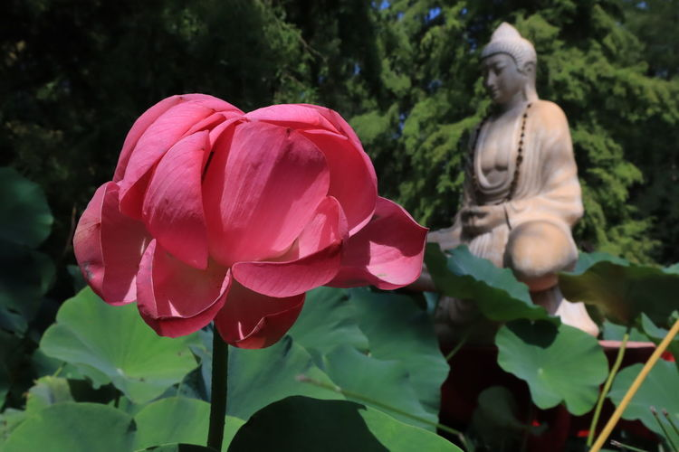 Close-up of pink statue amidst flowering plants