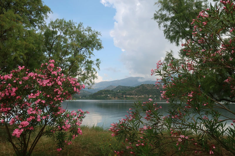 Sea view through oleander branches Beautiful GREECE ♥♥ Mediterranean  Beauty In Nature Cloud - Sky Flower Flowering Plant Greece Growth Idyllic Kefalonia Landscape Nature No People Non-urban Scene Oleander Outdoors Plant Scenics - Nature Sea Sky Tranquil Scene Tranquility Tree Water