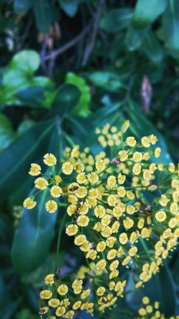 Nature_collection Flower#garden#nature#ecuador#santodomingoecuador#eyeEmfollowers#iphoneonly#nofiltrer#macro_garden#pretty#beautifulfollowmesho [ Flowers Bichos