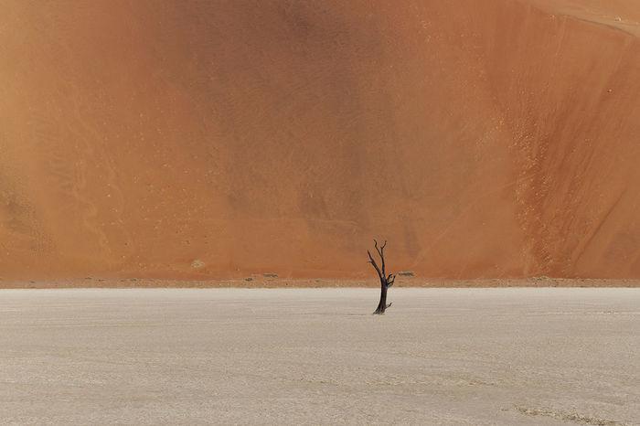 Africa Contrast Dead Dead Plant Deadvlei Desert Landscape Lonely