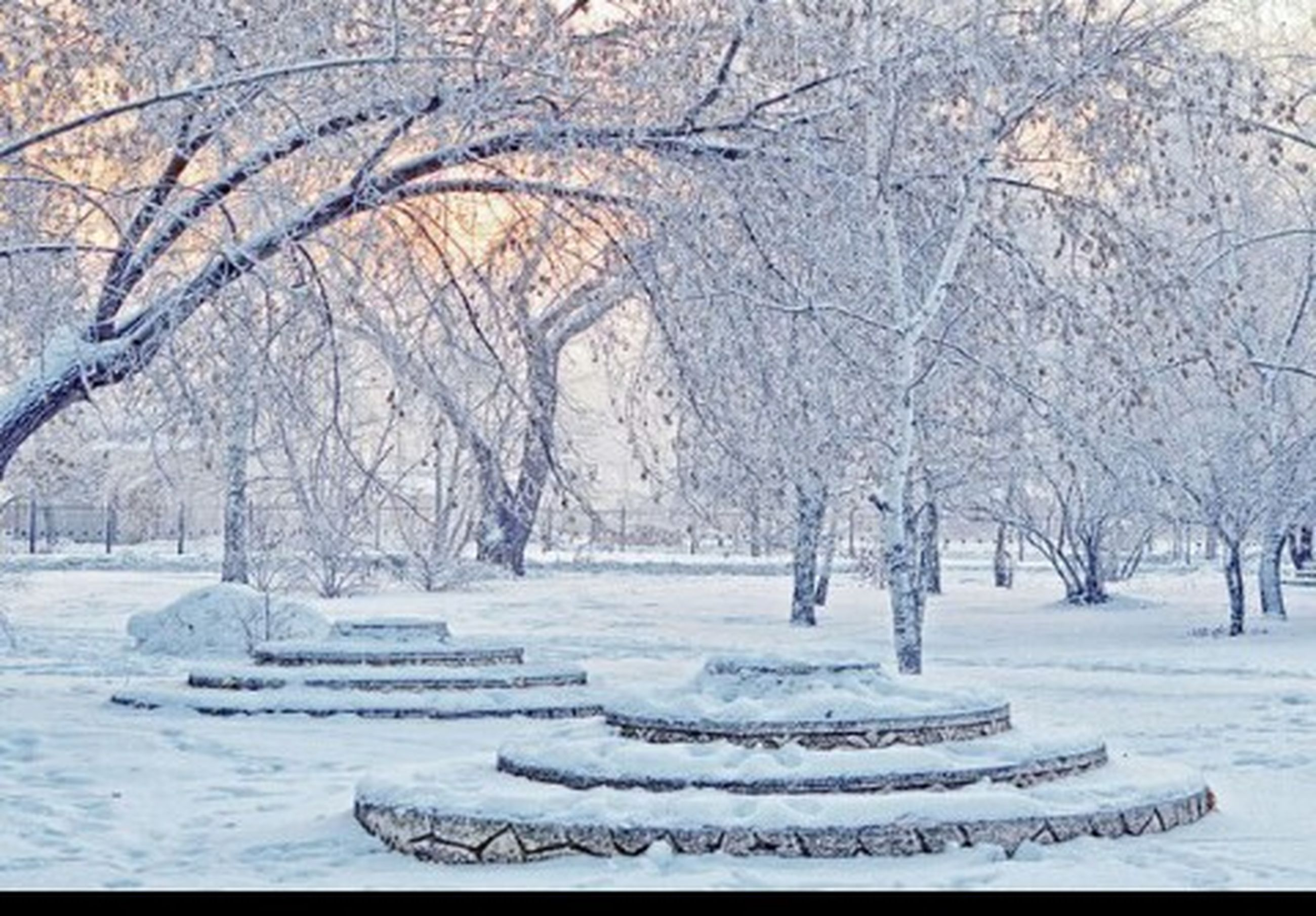 tree, snow, winter, cold temperature, bare tree, tranquility, season, nature, branch, weather, park - man made space, tranquil scene, covering, scenics, day, beauty in nature, landscape, field, white color, outdoors