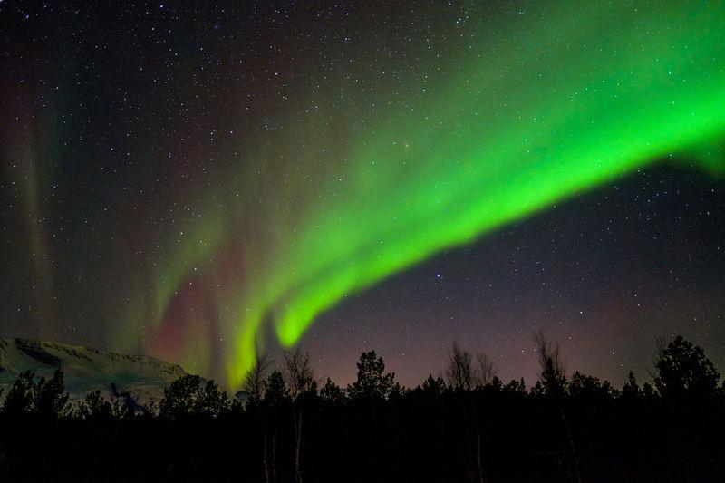 silhouette trees against polar light at night