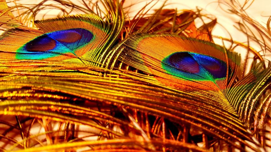 Trying new things with Galaxy S6. Macro Beauty Macro Galaxys6 Mobile Photography Smartphonephotography Nature Nature Photography EyeEm Nature Lover Eye4photography  EyeEm Gallery Trying New Things Mobilephoto Samsung Galaxy S6 No Filter Peacock Peacock Feather Feather
