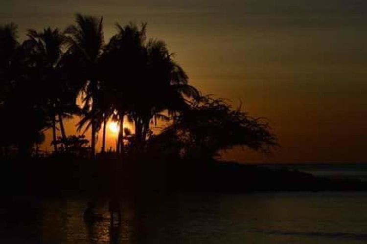 Tree Water Palm Tree Sunset Illuminated Silhouette Reflection Sky Landscape