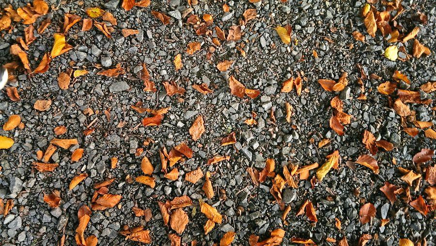 Forestwalk Forest Ground Autumn Autumn Leaves Autumn Colors