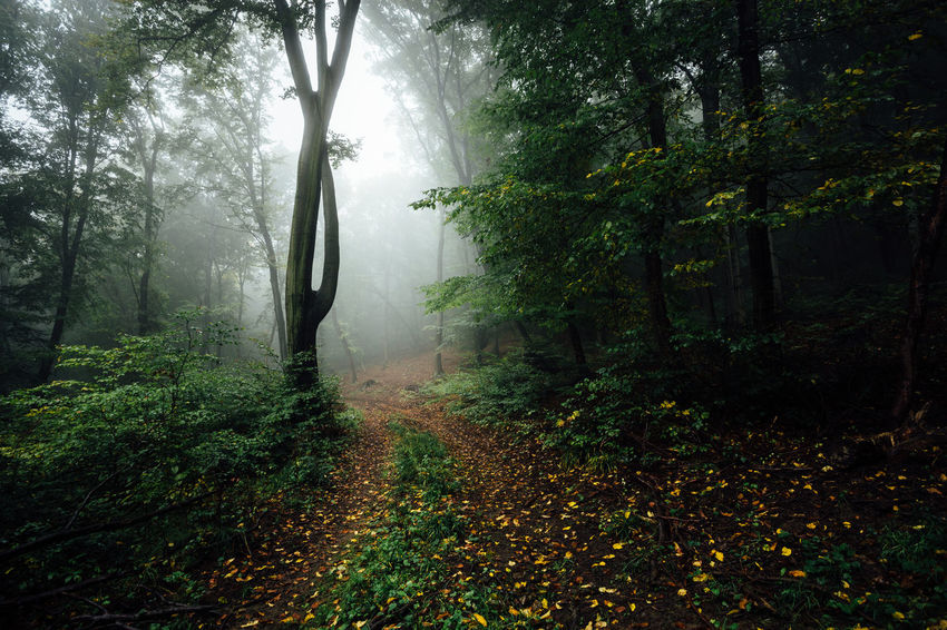 Harz Mountains, Germany Beauty In Nature Branch Day Fog Foggy Morning Forest Growth Harz Hazy  Landscape Leaf Mist Nature No People Outdoors Plant Scenics Tranquil Scene Tranquility Tree Weather