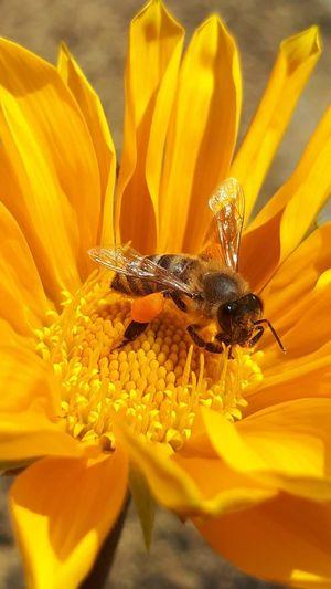 bee Flower Head