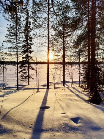 Sunset by the lake Sunset Light And Shadow Frozen Lake Tree Shadow Sunlight Sky Snow Covered Silhouette Snow Winter Frozen White Bare Tree