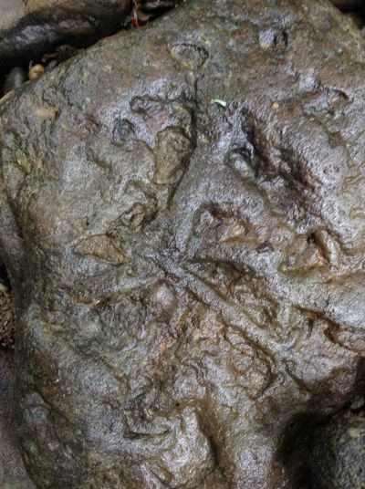 Saw in the creek, love the look, add to rock garden.. Fossil Cool Rocks Sawonmyadventure Fossil Rock Check This Out Onlygodcouldcreatethis Our World Thru My Eyes Nature Makes Me Smile Nature Photography Naturelovers Rocks