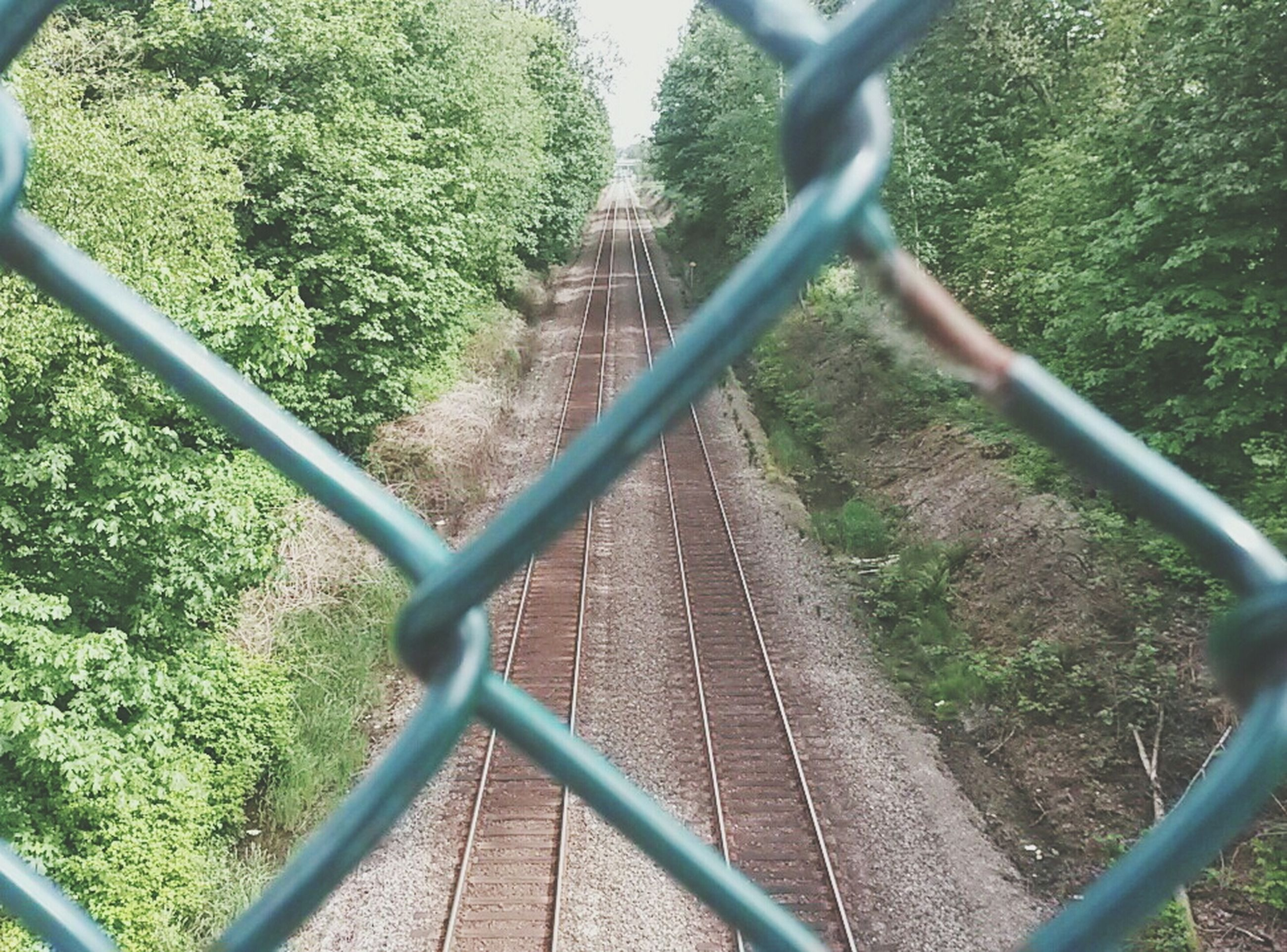 tree, railing, railroad track, metal, transportation, fence, rail transportation, growth, green color, high angle view, plant, the way forward, chainlink fence, day, nature, protection, metallic, diminishing perspective, no people, connection