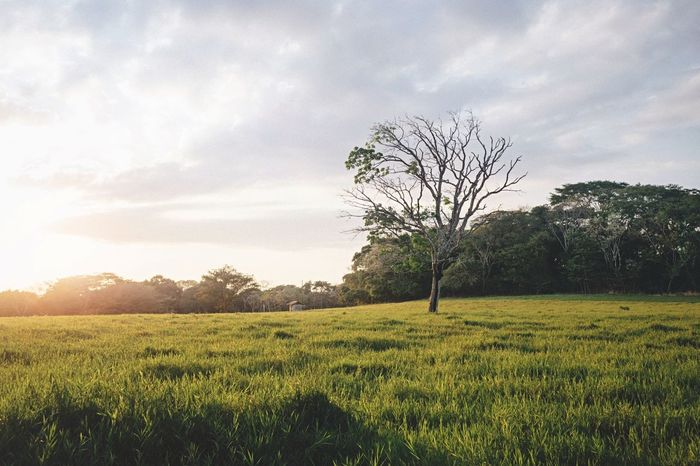 Nature Trees Landscape EyeEm Nature Lover Light Sunset Sky Vscocam Nature_collection