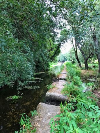 Green Color Tranquil Scene Scenics Lush Foliage Outdoors Day Nature River Walkway