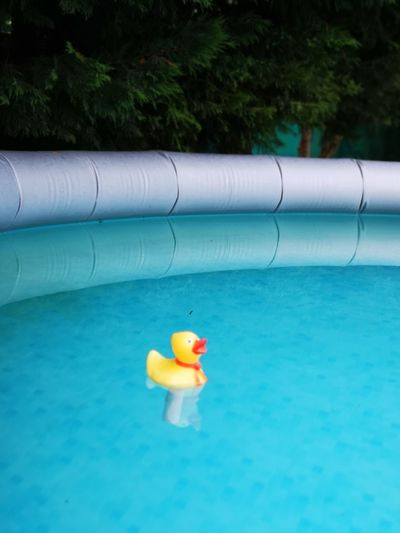 Close-up of toy floating on swimming pool