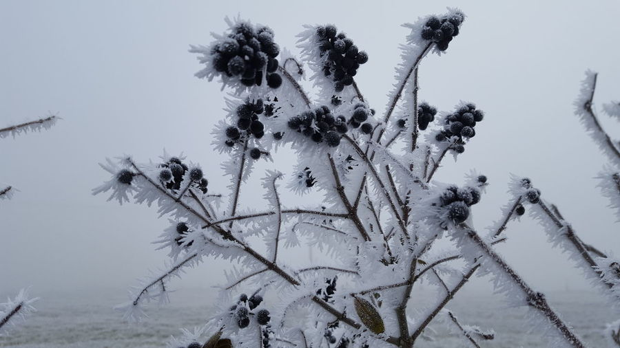 Close-up of flowering plants on snow covered land