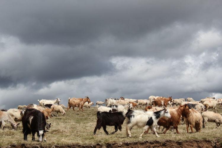 Horses grazing on grassy field