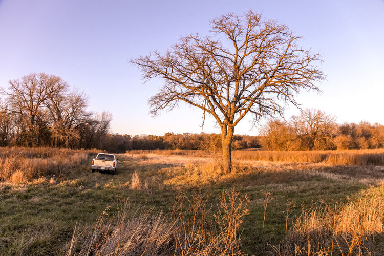 Bare Tree Beauty In Nature Car Countryside Day Field Grass Land Vehicle Landscape Nature No People Outdoors Rural Scene Sky Transportation Tree