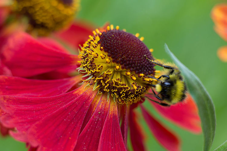 Close-up of honey bee perching on flower
