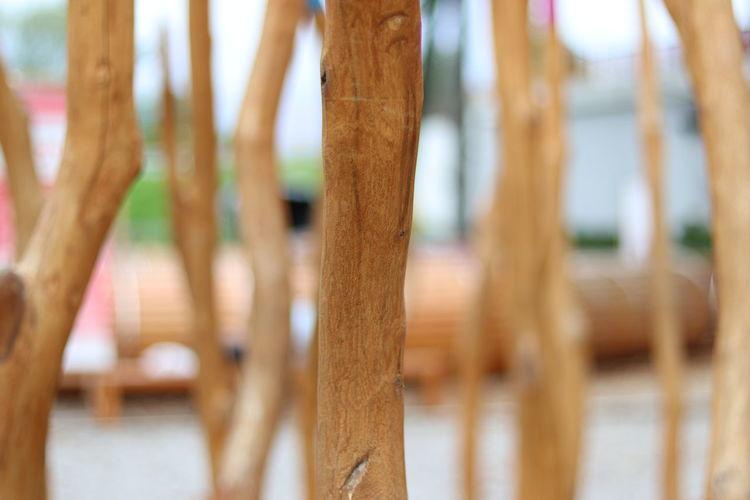 Close-up of bamboo tree