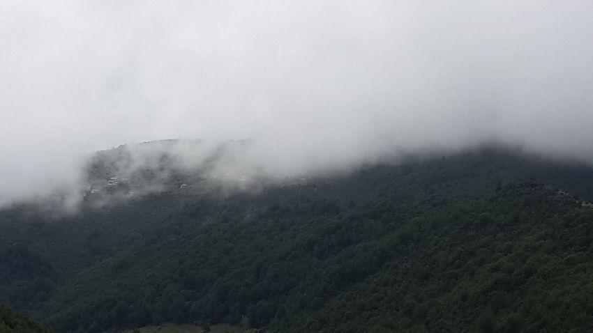 Nuture Foggy Morning Jungle