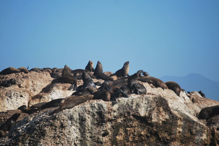 Seals on robbe island