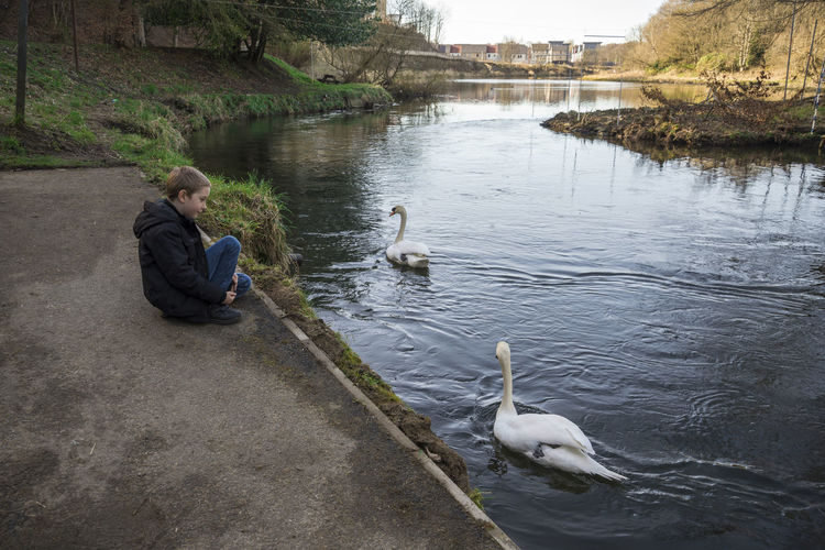 Boy Looking At Swans In Lake