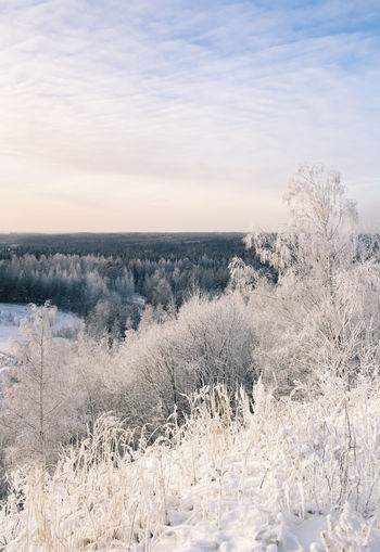 Scenic winter landscape with trees in Finland Atmospheric Mood Beautiful Birch Cloyds And Sky Cold Finland Forest Frost Frozen Hill Horizon Over Land Landscape Light And Shadow Many Nature No People Peaceful Snow Trees White Winter Wintry
