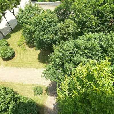High Angle View Growth Day Shadow Grass Sunlight Outdoors No People Nature Plant Green Color Tree