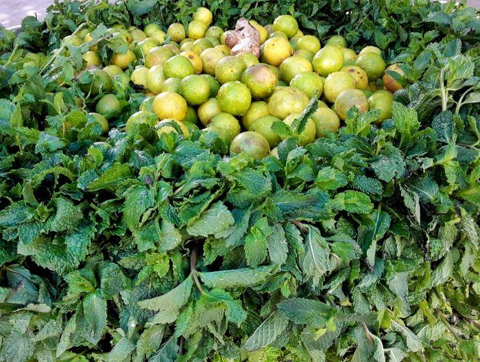 Mint Lemon Mintgreen Mint Green