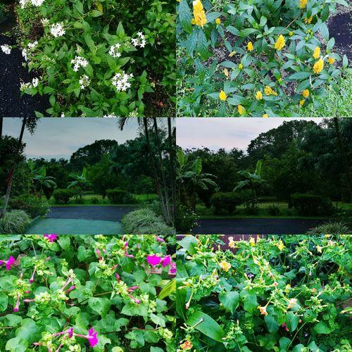 House's Garden