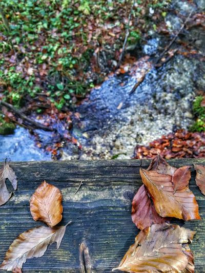 Outdoors Leaf