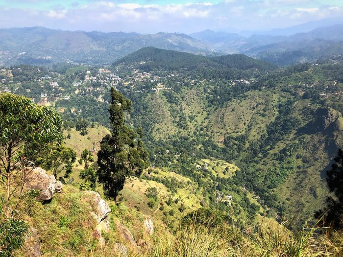 Scenic View Mountain Scenics - Nature Beauty In Nature Plant Landscape Tree Nature Environment Mountain Range Tranquility Growth Tranquil Scene High Angle View Outdoors