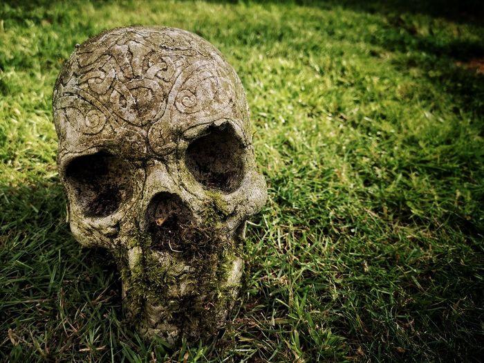 Skull // EyeEm